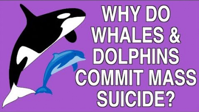 WHY DO WHALES AND DOLPHINS COMMIT MASS SUICIDE?